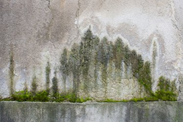 Forest on the wall