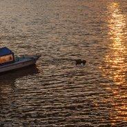 Golden Danube II